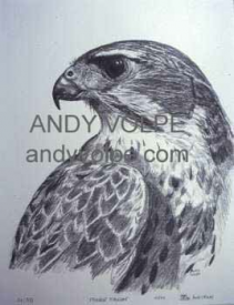 Andy Volpe Sample Art